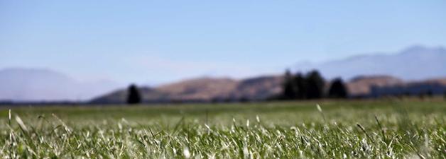 ngai-tahu-farming