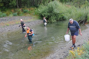 A team from Ngāi Tahu and Environment Canterbury looking for stranded fish in pools on Rakahuri/Ashley River.