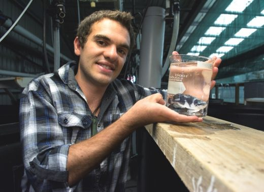 Matt holding a second generation hāpuku produced in 2013 as part of his PhD research, allowing the life-cycle of this species to be completed in captivity for the first time in the world.