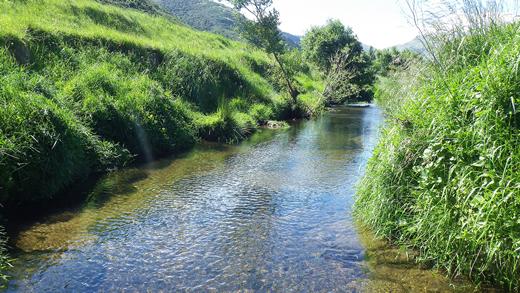 Kaituna River.