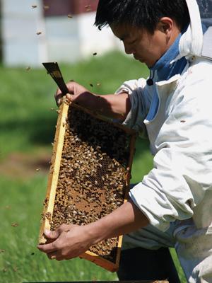 TK-69-honey-bees