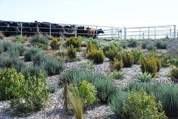 Cowshed plantings doing well at Te Whenua Hou.