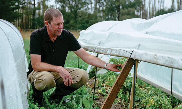Dr Charles Merfield, Head of the Future Farming Centre at the BHU inspects the taewa crop.