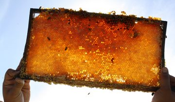 Oha Honey to focus on sustainable growth